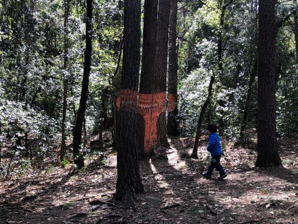 Buscamos setas en los árboles