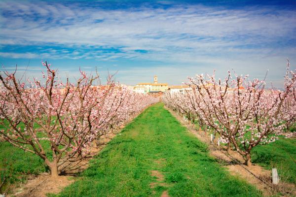 Visitem els camps florits de Benissanet