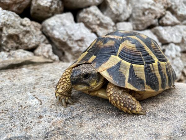 El hogar de las tortugas Con niños