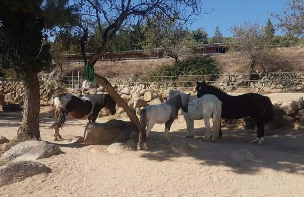 Mussara Equitació Emocional amb nens