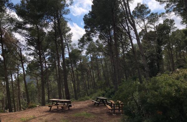 Àrea de lleure forestal, Joncosa del Montmell. Foto: ESCAPADAAMBNENS.COM